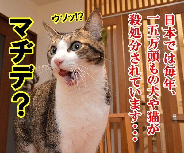 殺処分はゼロがいいわよね 猫の写真で4コマ漫画 1コマ目ッ