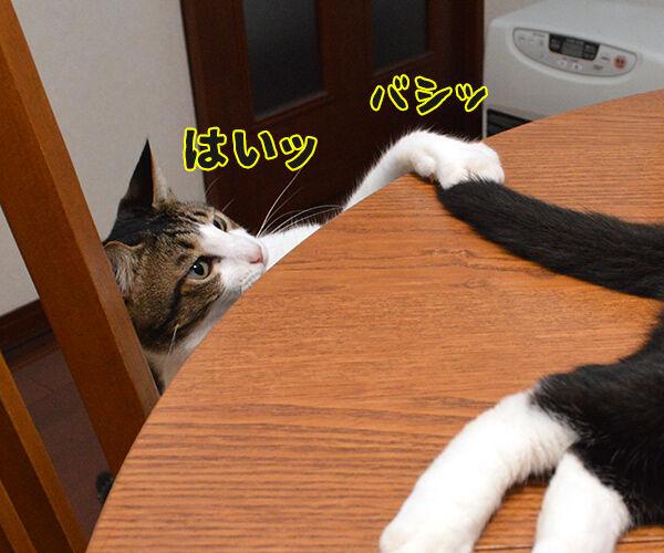 疲れたときは 猫の写真で4コマ漫画 2コマ目ッ