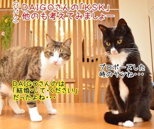 KSK 猫の写真で4コマ漫画 1コマ目ッ