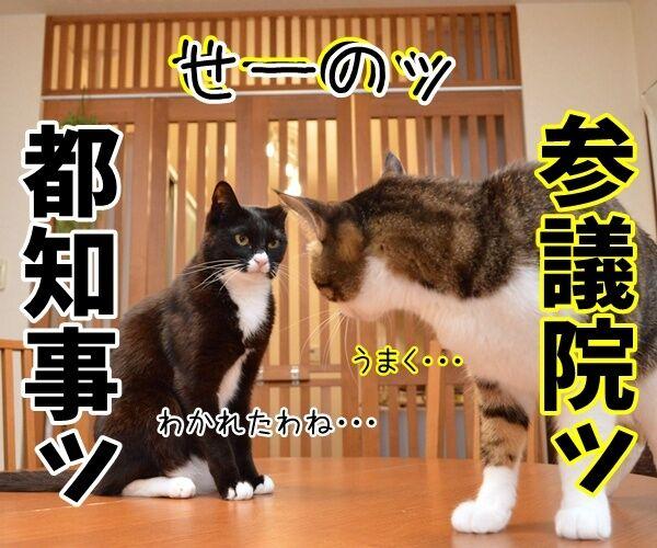二人が決めたコト 猫の写真で4コマ漫画 3コマ目ッ