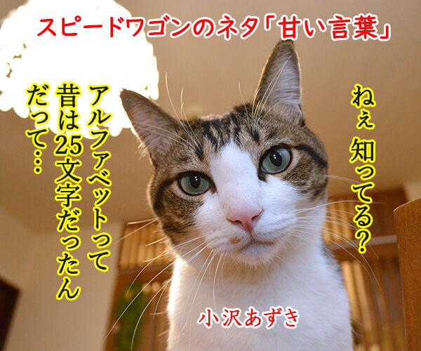 あま~いッ 猫の写真で4コマ漫画 1コマ目ッ