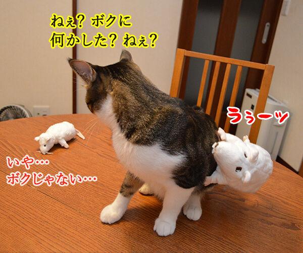 いたずらしちゃおッ 猫の写真で4コマ漫画 4コマ目ッ