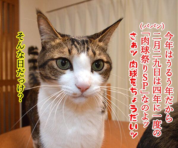 今年はうるう年だから 猫の写真で4コマ漫画 3コマ目ッ