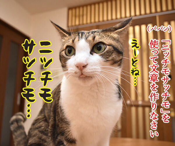ニッチモサッチモ 猫の写真で4コマ漫画 1コマ目ッ