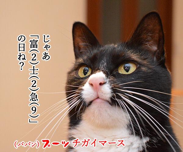 今年はうるう年だから 猫の写真で4コマ漫画 2コマ目ッ