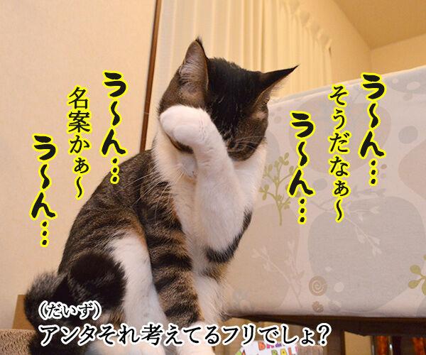 作戦会議 猫の写真で4コマ漫画 2コマ目ッ