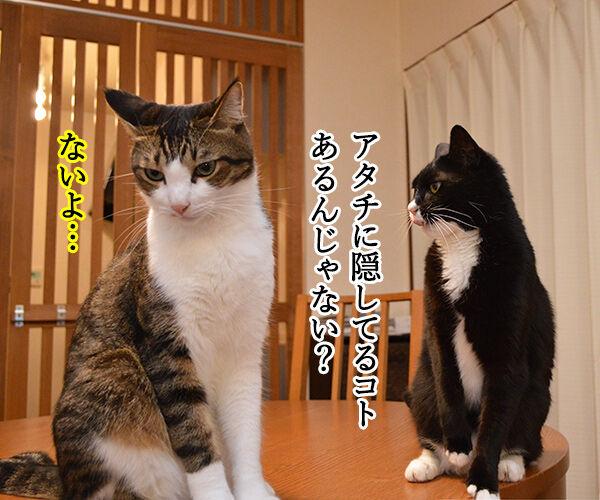 隠してなぁい? 猫の写真で4コマ漫画 1コマ目ッ