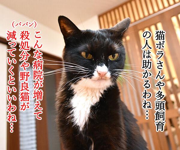 無料で猫の不妊・去勢手術をする動物病院があるんですってッ 猫の写真で4コマ漫画 2コマ目ッ