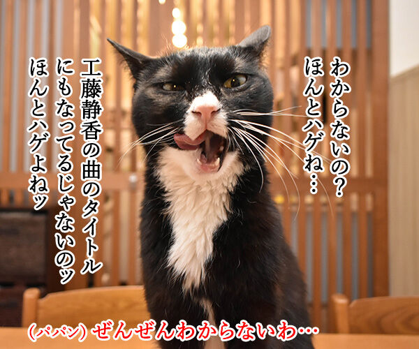 目と目で通じ合う仲になりたいわッ 猫の写真で4コマ漫画 3コマ目ッ