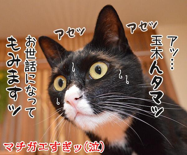 OLだいず 猫の写真で4コマ漫画 4コマ目ッ