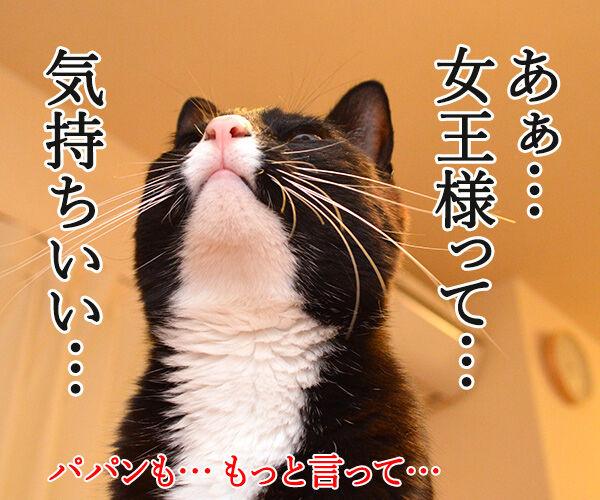 だいず女王様 愛の言葉 猫の写真で4コマ漫画 4コマ目ッ