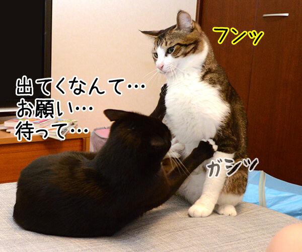 ぐうたら主婦 猫の写真で4コマ漫画 2コマ目ッ