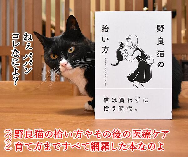 『野良猫の拾い方』って本を買ったのよッ 猫の写真で4コマ漫画 1コマ目ッ