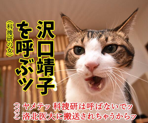 猫さんの前で死んだふりをしたら? 猫の写真で4コマ漫画 3コマ目ッ