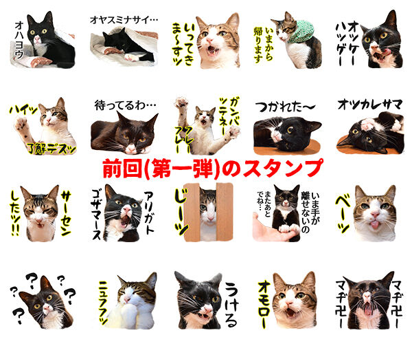 あずだいのLINEスタンプ 第二弾 猫の写真で4コマ漫画 6コマ目ッ