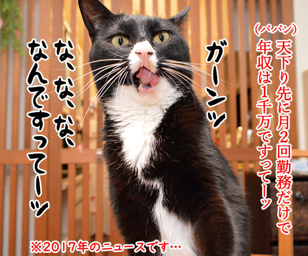 文科省の天下りは『月2回勤務』で『年収1千万円』なのッ 猫の写真で4コマ漫画 1コマ目ッ
