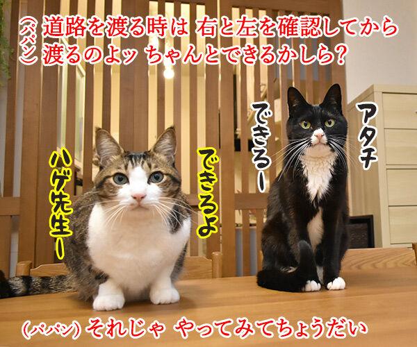 道路を渡るときはちゃんと左右を確認するのよッ 猫の写真で4コマ漫画 1コマ目ッ