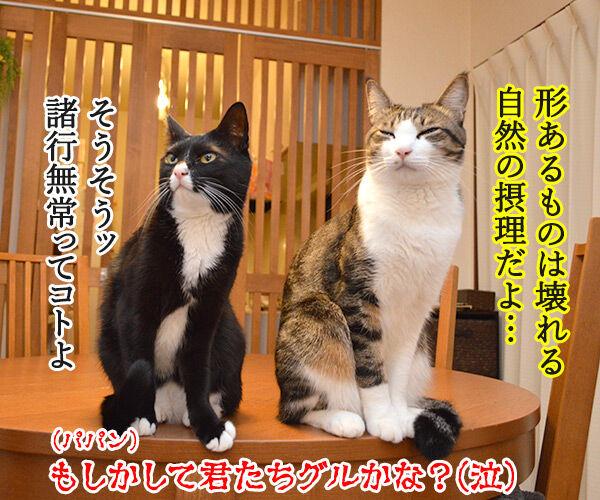 ケンカをやめて 猫の写真で4コマ漫画 4コマ目ッ