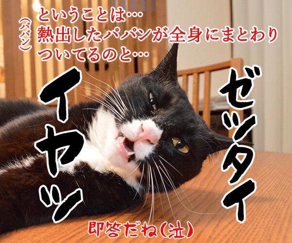 各地で猛暑なんですってッ 猫の写真で4コマ漫画 4コマ目ッ