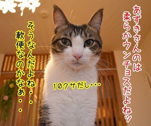 ウンチョス調査 猫の写真で4コマ漫画 3コマ目ッ