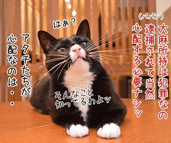 元女優・高樹沙耶が大麻所持の疑いで逮捕ですってッ 猫の写真で4コマ漫画 3コマ目ッ