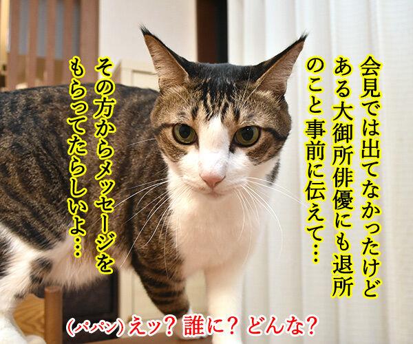 中居くんがジャニーズ事務所を退所しちゃうのよッ 猫の写真で4コマ漫画 3コマ目ッ