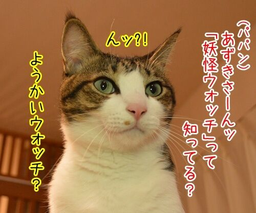 妖怪ウォッチ 猫の写真で4コマ漫画 1コマ目ッ