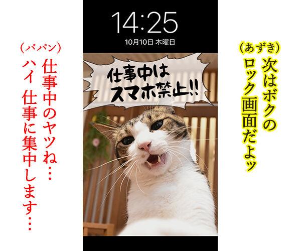 猫に叱られたい人のためのロック画面なのッ 猫の写真で4コマ漫画 3コマ目ッ