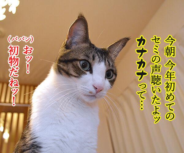 セミの声 猫の写真で4コマ漫画 2コマ目ッ