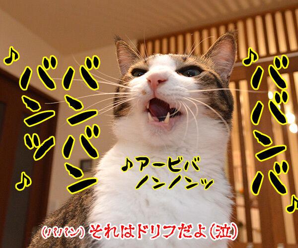 猫バンバン 猫の写真で4コマ漫画 4コマ目ッ