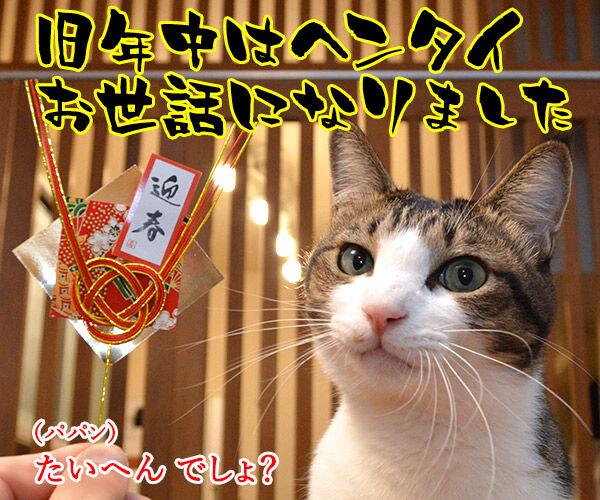 元旦だから新年のご挨拶なのッ 猫の写真で4コマ漫画 2コマ目ッ