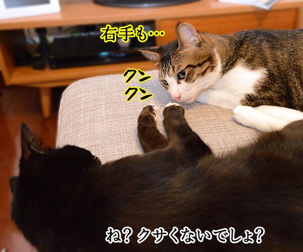 疑惑 其の二 猫の写真で4コマ漫画 3コマ目ッ