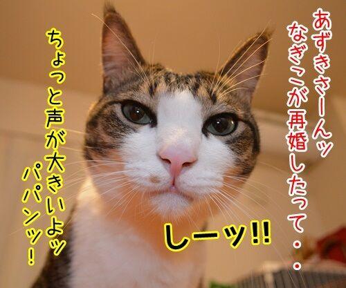遠野なぎこさん 結婚おめでとう 猫の写真で4コマ漫画 1コマ目ッ