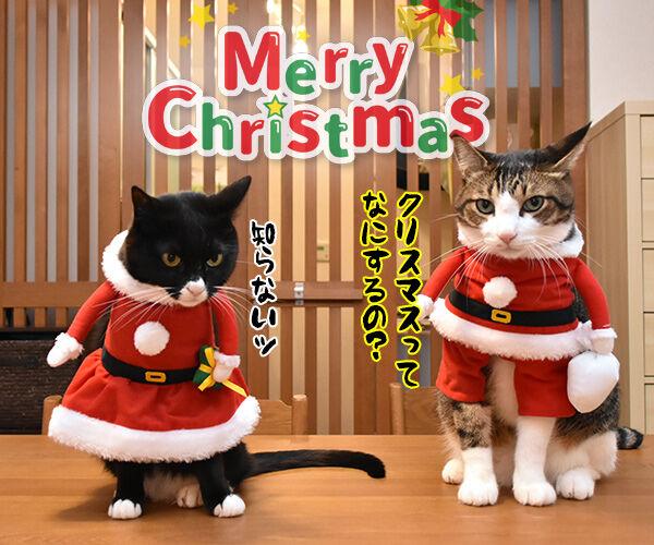 メリークリスマスだからパパンのために唄うのよッ 猫の写真で4コマ漫画 3コマ目ッ