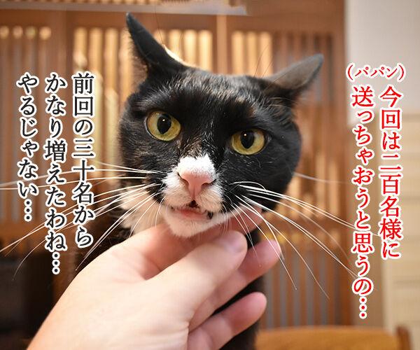 今年もあずだい年賀状を送っちゃうわよーッ 猫の写真で4コマ漫画 2コマ目ッ