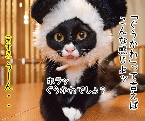 「ぐうかわ」ってどんな意味なの? 猫の写真で4コマ漫画 2コマ目ッ