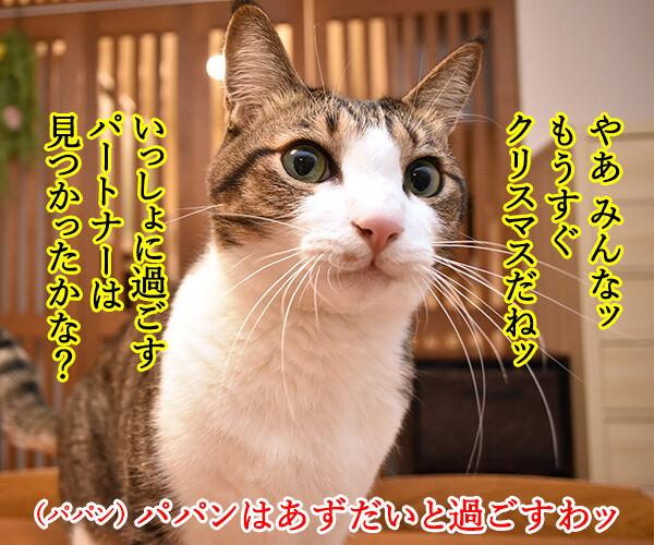 11月12月はカップル成立率が低いんですってッ 猫の写真で4コマ漫画 1コマ目ッ