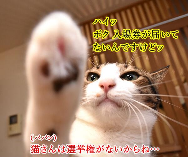 期日前投票に行ってちょーだいッ 猫の写真で4コマ漫画 2コマ目ッ