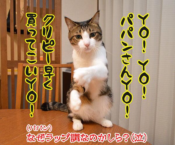 どうおとしまえつけるつもり? 猫の写真で4コマ漫画 4コマ目ッ