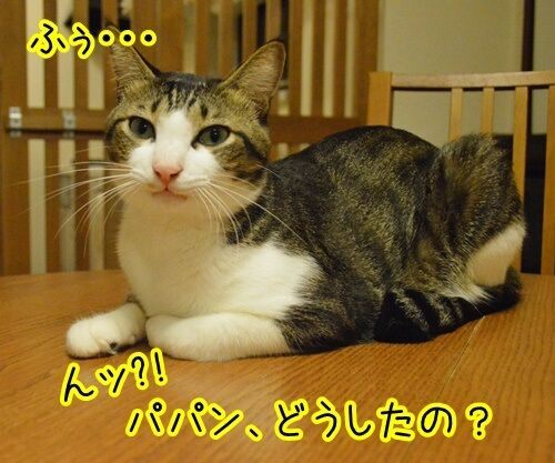 お願いがあるの 猫の写真で4コマ漫画 4コマ目ッ
