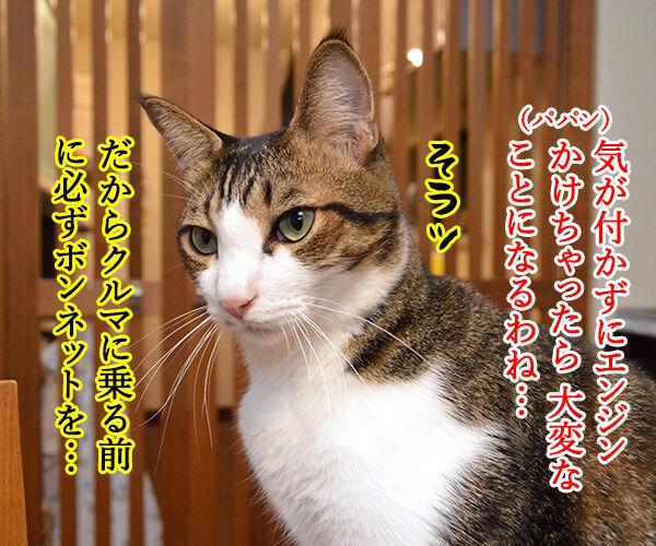 猫バンバン 猫の写真で4コマ漫画 3コマ目ッ