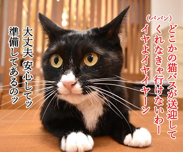 台風だから行きたくないわー 猫の写真で4コマ漫画 3コマ目ッ