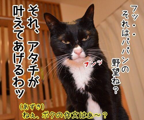 ボクのゆめ 猫の写真で4コマ漫画 4コマ目ッ