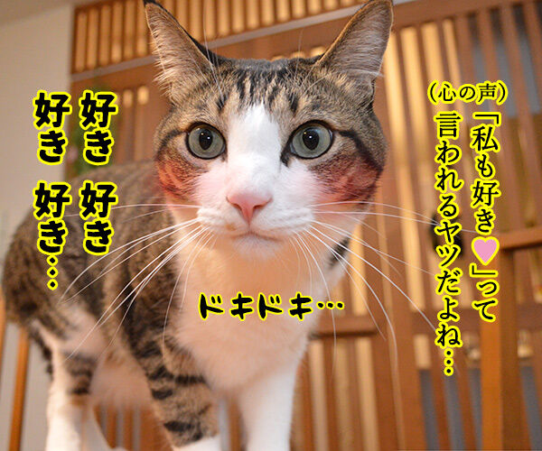 「好き」って10回言ってみてッ 猫の写真で4コマ漫画 3コマ目ッ