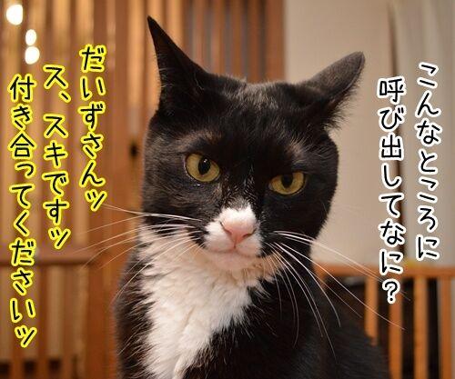告白されたけど 猫の写真で4コマ漫画 1コマ目ッ