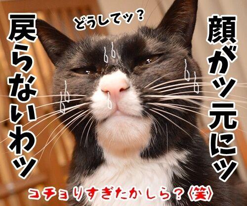 そこのハゲ、コチョりなさいッ 猫の写真で4コマ漫画 4コマ目ッ