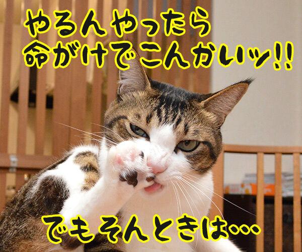 なにしとんねん、ワレ!! 猫の写真で4コマ漫画 3コマ目ッ