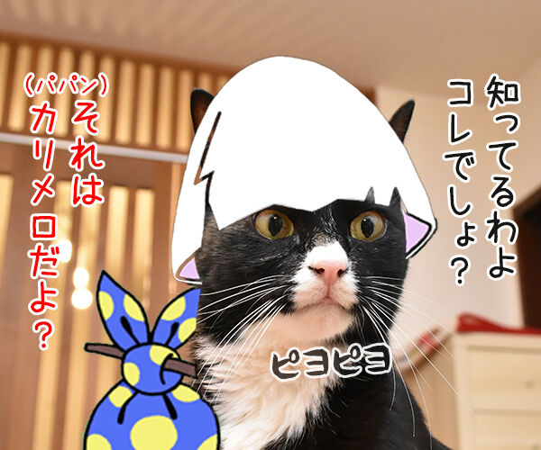 メルカリってご存知? 猫の写真で4コマ漫画 2コマ目ッ