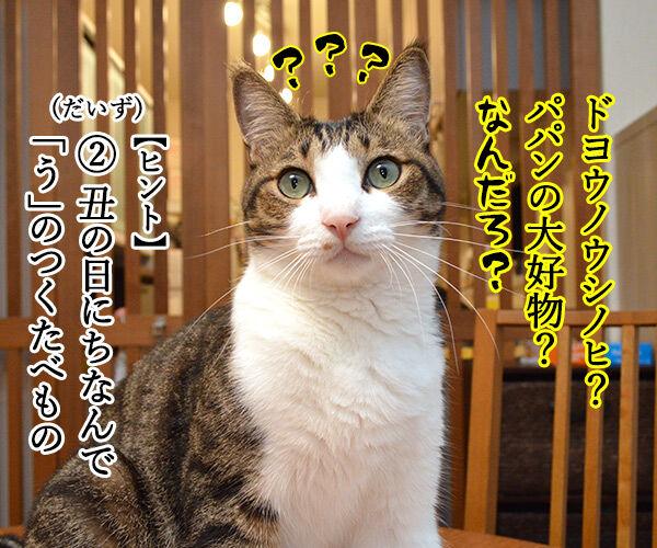 土用の丑の日でクイズなの 猫の写真で4コマ漫画 2コマ目ッ