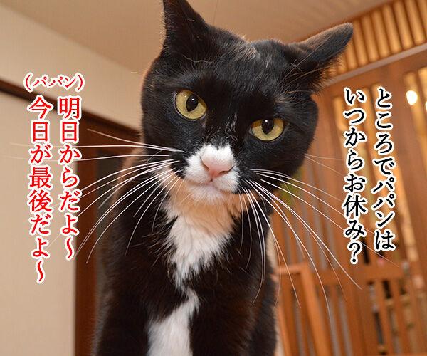 帰省ラッシュ始まるッ 猫の写真で4コマ漫画 2コマ目ッ